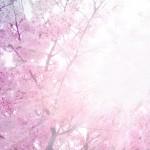 春爛漫とはどんな意味? 英語で言うとどうなりますか?