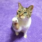 招き猫の由来と挙げてる手の意味って何ですか?