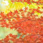『秋の言葉』 25コを厳選!