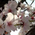 春分の日とは? どんな意味がありますか? 【2017年版】