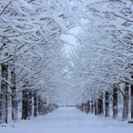 『冬の言葉』 20コを厳選!