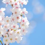 『春の俳句』 ベスト20!