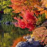 『秋の俳句』 ベスト20!