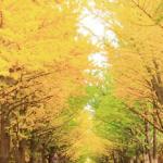 秋の風物詩といえば…を50コ集めてみました