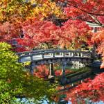 京都の俳句 30選 [優雅]