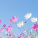 俳句の季語で秋らしいもの、らしくないものなど 30【一覧】