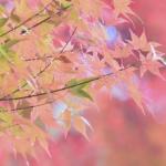 夢の俳句 30選 -泡影-