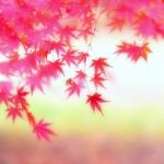紅葉(もみじ)の俳句 30選 +3 -錦秋-