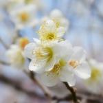 俳句の季語で冬らしいもの、らしくないものなど 30【一覧】