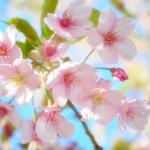 俳句の季語で春らしいもの、らしくないものなど 30【一覧】