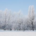 1月の俳句 20選 -厳冬-