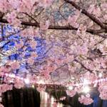 4月の俳句 20選 -佳景-