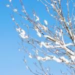 冬の和歌 20選 【現代語訳】付き
