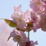 春の和歌 20選 【現代語訳】付き