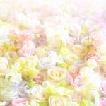 花の和名 75 の【一覧】 -百花繚乱-