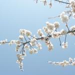 花の季語 130 の【一覧】とその俳句